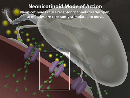 Neonicotinoids