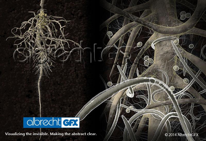 Roots & Nematodes